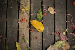 Priorità bassa di legno con i fogli di autunno Fotografia Stock Libera da Diritti