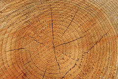 Priorità bassa di legno degli anelli di albero Fotografia Stock Libera da Diritti