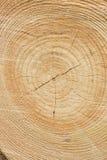Priorità bassa di legno degli anelli di albero Immagini Stock Libere da Diritti