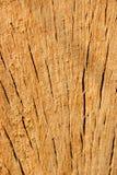 Priorità bassa di legno di quercia. Immagini Stock