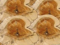 Priorità bassa di legno di sezione trasversale Fotografia Stock Libera da Diritti