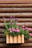Priorità bassa di legno e del fiore Immagini Stock Libere da Diritti