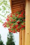 Priorità bassa di legno e del fiore Fotografia Stock