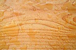 Priorità bassa di legno e dell'acqua Fotografie Stock Libere da Diritti