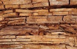 Priorità bassa di legno marcia Fotografie Stock Libere da Diritti