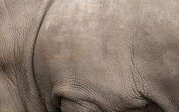 Priorità bassa di macro della pelle di rinoceronte Fotografie Stock Libere da Diritti