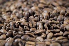 Priorità bassa di molti chicchi di caffè Immagini Stock Libere da Diritti