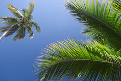 Priorità bassa di Palmtrees di estate Fotografie Stock
