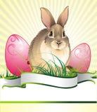 Priorità bassa di Pasqua con coniglio Fotografie Stock Libere da Diritti