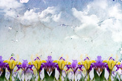 Priorità bassa di primavera Fotografia Stock