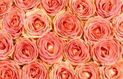 Priorità bassa di rosa creativa Fotografia Stock Libera da Diritti