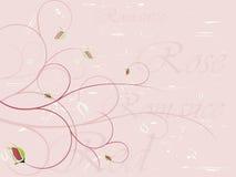 Priorità bassa di rosa elegante Fotografia Stock Libera da Diritti