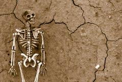 Priorità bassa di scheletro Immagine Stock