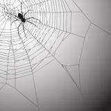 Priorità bassa di Spiderweb Immagini Stock Libere da Diritti