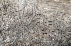 Priorità bassa di struttura del Driftwood Fotografia Stock Libera da Diritti