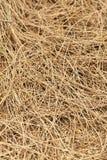 Priorità bassa di struttura del Weed Fotografia Stock