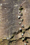 Priorità bassa di struttura dell'edera e della roccia fotografia stock