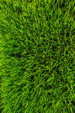 Priorità bassa di struttura dell'erba verde Immagini Stock Libere da Diritti