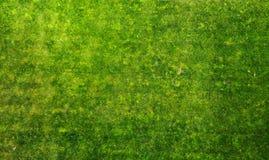 Priorità bassa di struttura dell'erba verde aereo fotografia stock libera da diritti