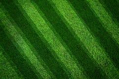 Priorità bassa di struttura dell'erba verde e righe oblique Fotografie Stock Libere da Diritti