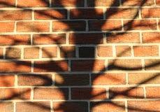 Priorità bassa di struttura della siluetta dell'albero del muro di mattoni Fotografie Stock Libere da Diritti