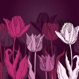 Priorità bassa di vettore con i tulipani royalty illustrazione gratis