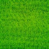 Priorità bassa di vettore dell'erba verde Immagini Stock Libere da Diritti
