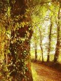 Priorità bassa dorata dei fogli di autunno fotografie stock libere da diritti