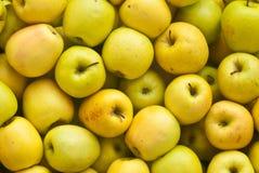 Priorità bassa dorata delle mele Fotografia Stock