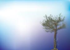 Priorità bassa ed albero blu Fotografia Stock Libera da Diritti