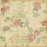 Priorità bassa elegante misera delle rose botaniche dell'annata Fotografie Stock