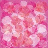 Priorità bassa floreale chiara con le rose bianche e rosse Fotografia Stock Libera da Diritti