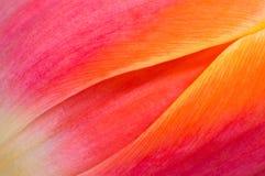 Priorità bassa floreale coloreful astratta Immagini Stock Libere da Diritti