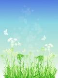 Priorità bassa floreale con erba verde Fotografie Stock