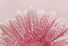 Priorità bassa floreale del fiore Fotografia Stock Libera da Diritti