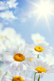Priorità bassa floreale di estate dell'annata astratta Fotografie Stock