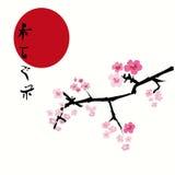 Priorità bassa floreale di Sakura (fiore di ciliegia) illustrazione vettoriale