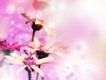 Priorità bassa floreale luminosa Fotografia Stock