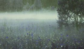 Priorità bassa floreale Molti fiori blu e gialli fioriscono di estate in una foschia della radura di mattina Fotografia Stock