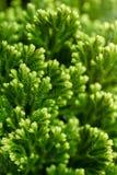 Priorità bassa floreale verde Fotografia Stock