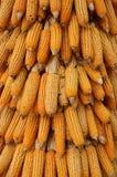 Priorità bassa gialla del cereale Immagini Stock