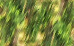 Priorità bassa gialla verde Fotografie Stock Libere da Diritti