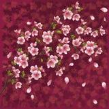 Priorità bassa giapponese con il fiore di sakura Fotografia Stock