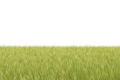Priorità bassa isolata dell'erba Fotografie Stock