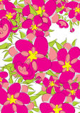 Priorità bassa luminosa dei fiori Fotografie Stock