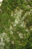 Priorità bassa muscosa della roccia Fotografia Stock Libera da Diritti