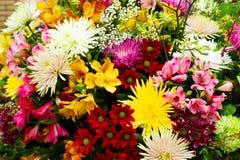 Priorità bassa naturale dei fiori immagini stock