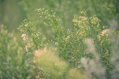 Priorità bassa naturale di estate Fotografia Stock Libera da Diritti