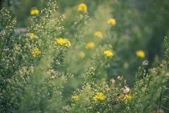 Priorità bassa naturale di estate Fotografie Stock Libere da Diritti