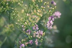 Priorità bassa naturale di estate Fotografie Stock